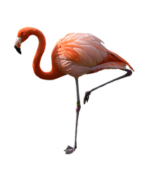 Flamingo fashion makes a comeback
