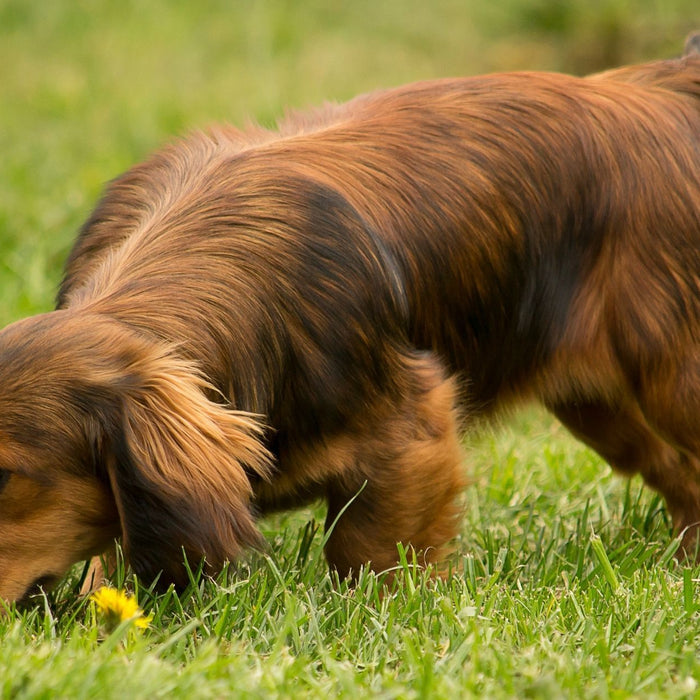 Why Sniffing Is Essential For Your Dog's Wellbeing
