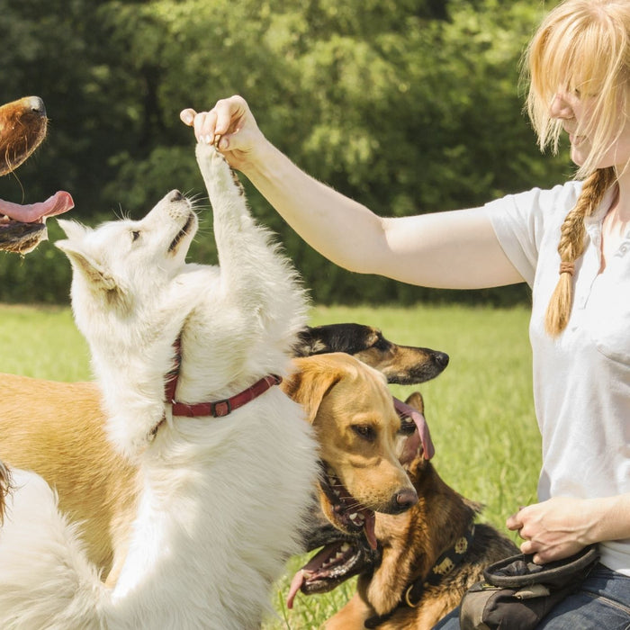 3 Quick + Easy Tricks To Teach Your Dog