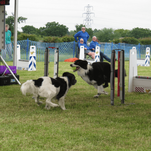 5 Reasons To Give Flyball A Go
