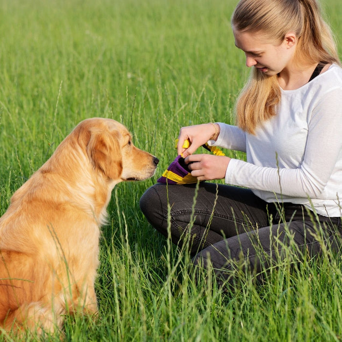 4 Easy Ways To Keep Your Dog Active and Happy