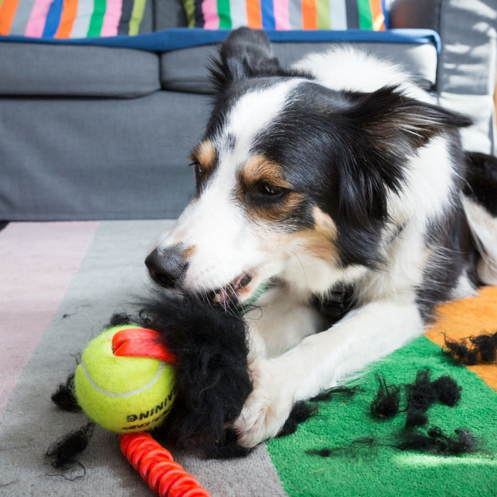 Why Indestructible Dog Toys Aren't the Answer (And What Is)