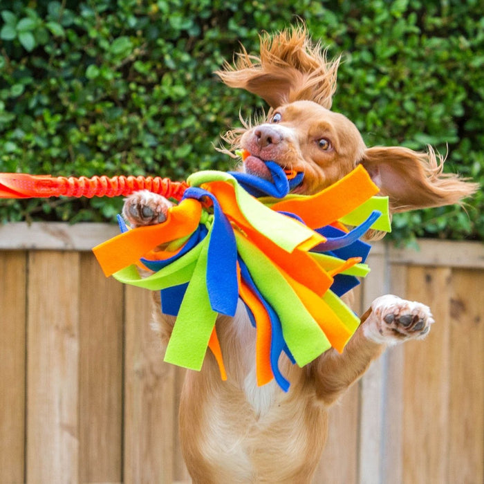 4 Reasons The Crazy Thing Should Be Your Dog's Next Toy