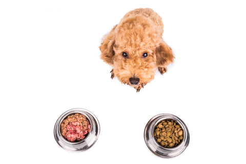 Does What You Feed Your Dog Really Matter? — Tug-E-Nuff ...