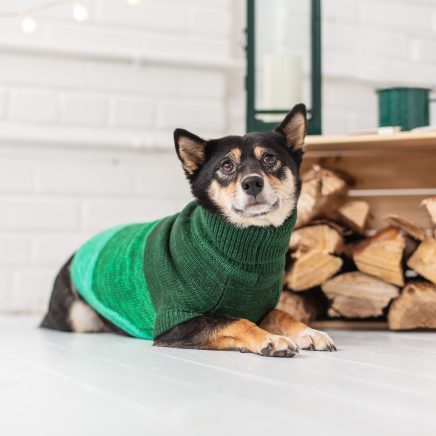 GFpet Knit Trail Sweater