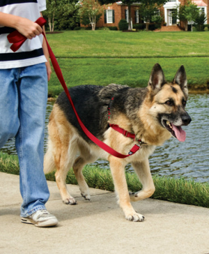 Easy Walk No-Pull Harness with Leash