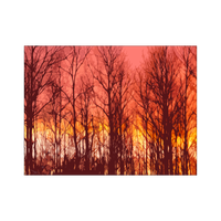 Skeletons at Sunset Art Print - Upper Michigan