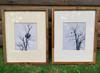 Eagle in Tree and Nest in Winter in Ontonagon, Michigan | Set of 2 Framed Photos