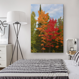 Fall in Upper Michigan Wall Art | Autumn Trees in Full Color | Canvas Print