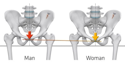 Saddle Geometry of Men and Women