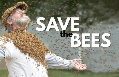 Groundbreaking Research Gives Hope to Bees