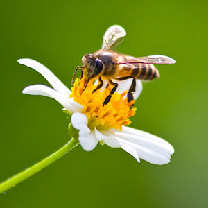 The BeeFriendly™ Research Initiative