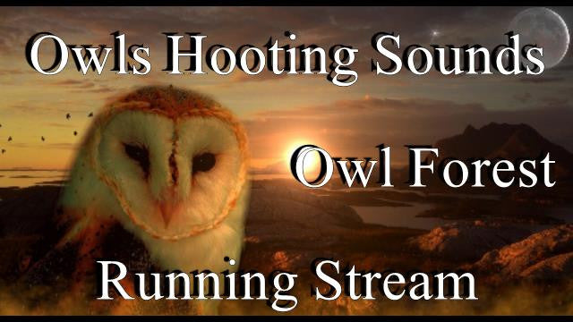 Owls Hooting Sounds 2 Hours Owl Forest Running Stream Amazing High Quality  Nature Sounds
