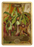 Plant Token (1/1) by Marianne North - Token - Original Magic Art - Accessories for Magic the Gathering and other card games
