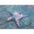 Sigiled Starfish Print - Print - Original Magic Art - Accessories for Magic the Gathering and other card games
