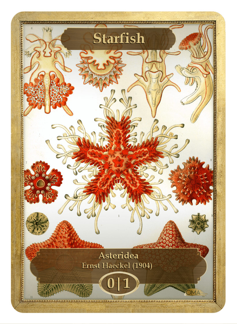 Starfish Token (0/1) by Ernst Haeckel - Token - Original Magic Art - Accessories for Magic the Gathering and other card games