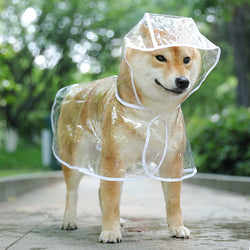 Dog raincoats transparent