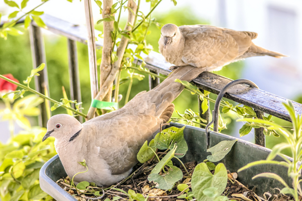 How to Attract More Birds into Your Garden