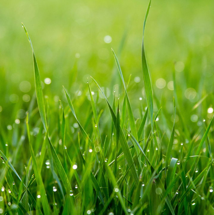 The Best Type of Grass for your Garden