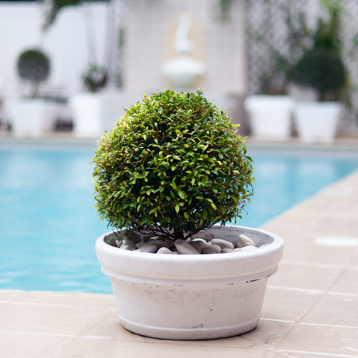 Watering outdoor potted plants: What you need to know