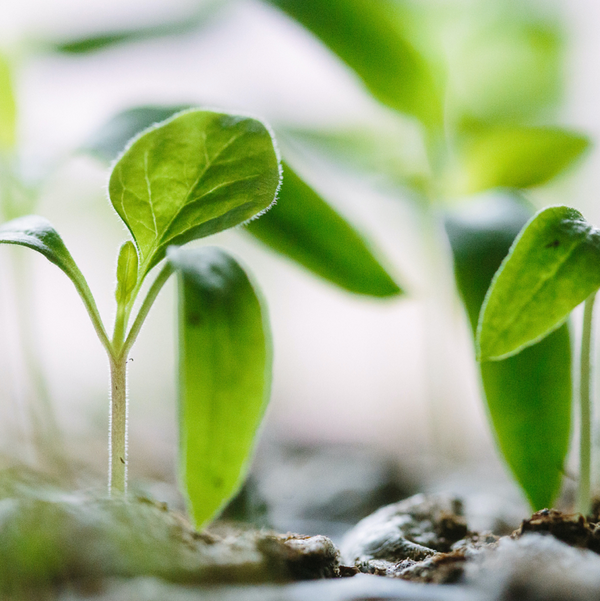 When and How to Plant Seedlings