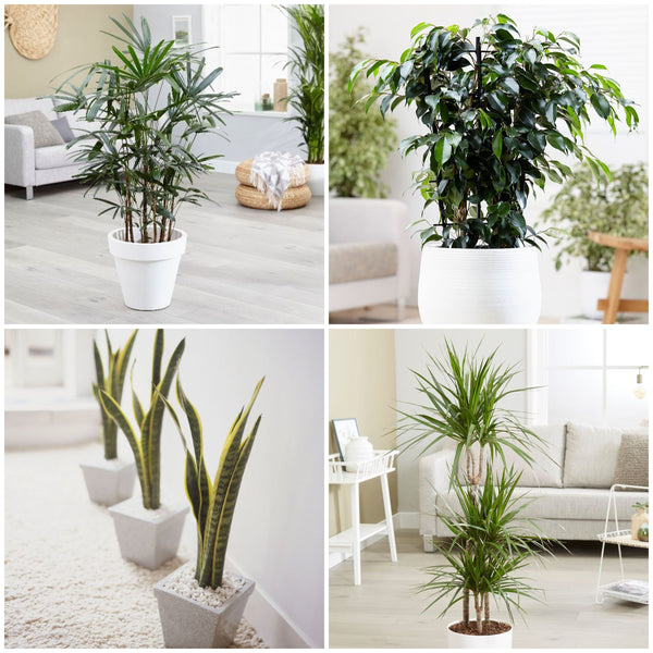 Are you aware of the daily toxins you are inhaling? These top 5 indoor Plants are the best for clean air in your home.