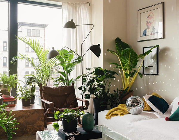 How to get a jungle home with these 10 easy houseplants to grow
