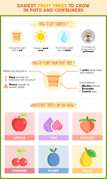 Easiest trees to grow in pots infographic