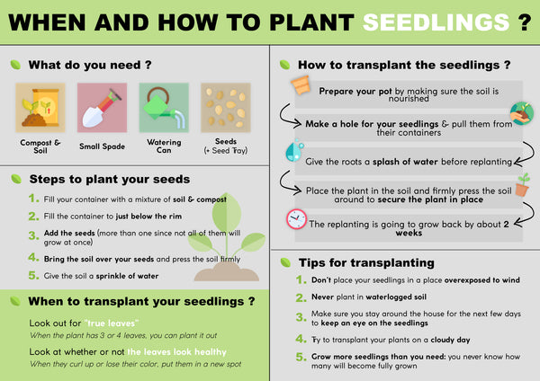 When and how to plant seedlings | Pot Shack