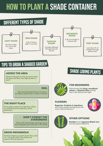 How to plant a shade container   Infographic   Pot Shack