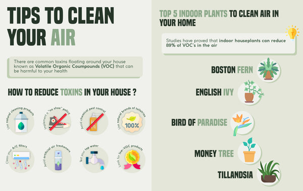 Best air purifying plants   Infographic   Pot Shack