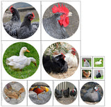 QKB003-Poultry wall hanging Quilting Kit