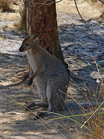 Wallaby fabric panel
