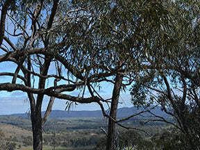 View of Pyrenees Victoria Australia Fabric Panel