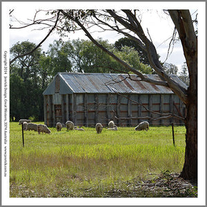 S6055-Machinery Shed with Sheep Quilting Panel