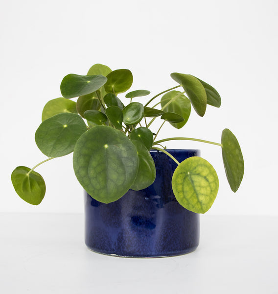 Handmade planter ceramic - Costa Azul - Urban Nature Culture