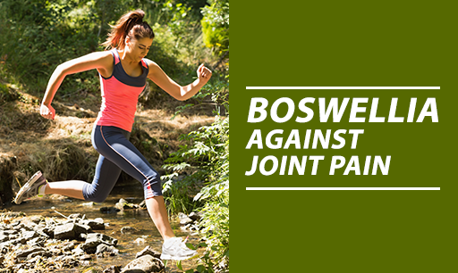 Boswellia against joint pain