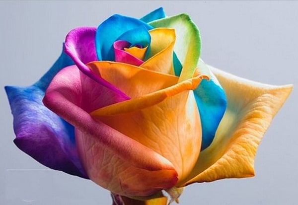 Ultra-Rare Rainbow Rose Seeds - 100 Seed Pack