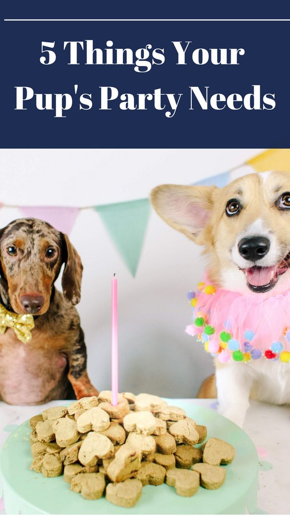 5 Things Your Pup's Party Needs to Celebrate