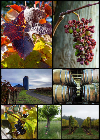 Winery Collage Poster
