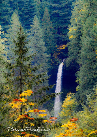 Silver Falls Maples