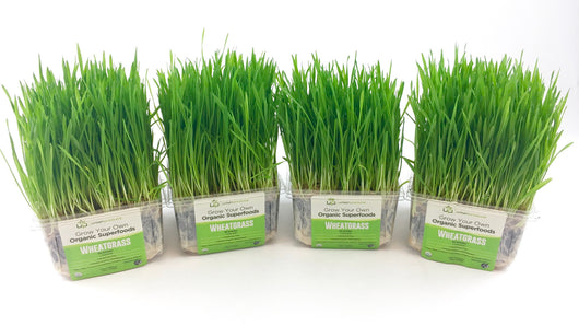 Wheatgrass Kit