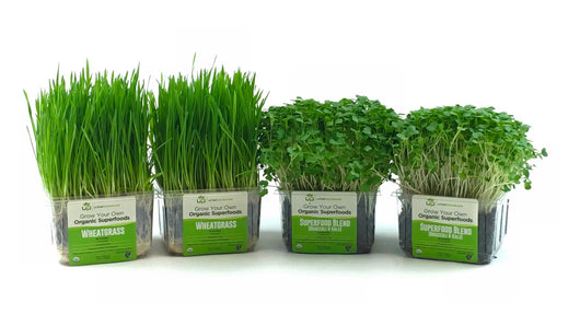 Wheatgrass/Micro Kit