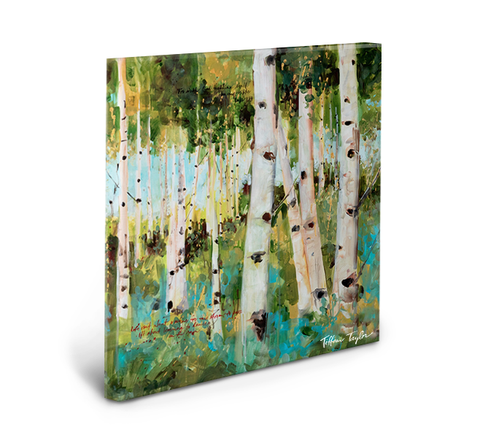 Aspen Trees Gallery Wrapped Canvas