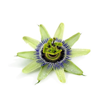 dreaming_passionflower