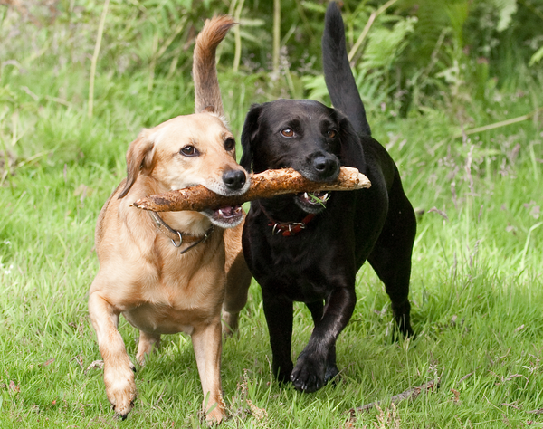 Safer Alternatives to the Dog Park