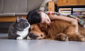 girl sleeping with cat and dog