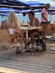 chihuahua with couple at restaurant on beach