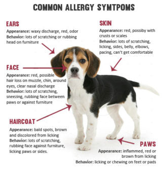 allergy chart for dogs