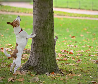 dog chasing squirrel